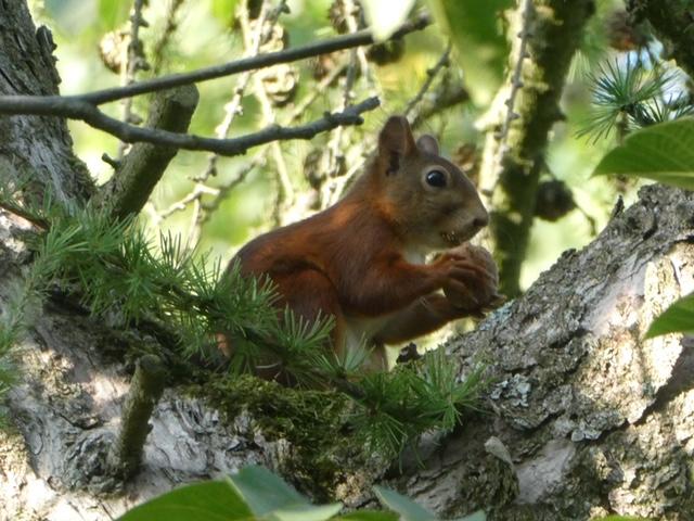 Eekhoorn in de B&B tuin