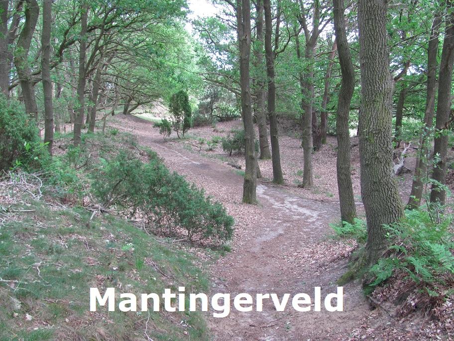 Mantingerveld